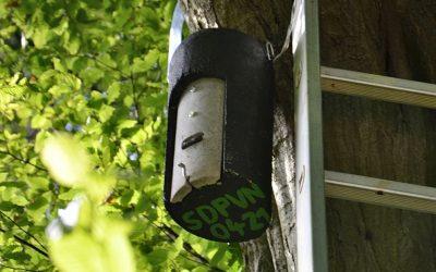 Nova bivališča za netopirje v Ljubljani